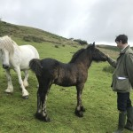 Rory Stewart and Fell pony foal
